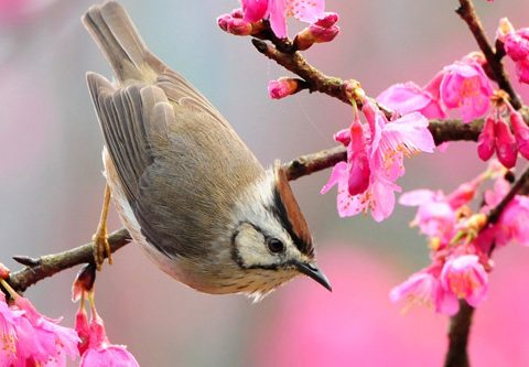 Một thoáng cảm xúc mùa xuân
